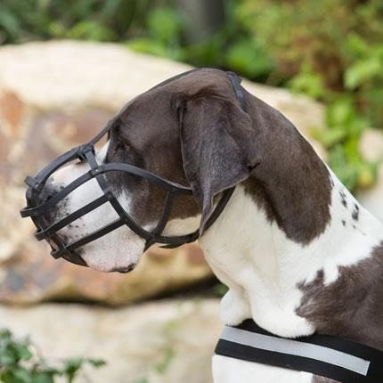 Bozales para perros Julius K9