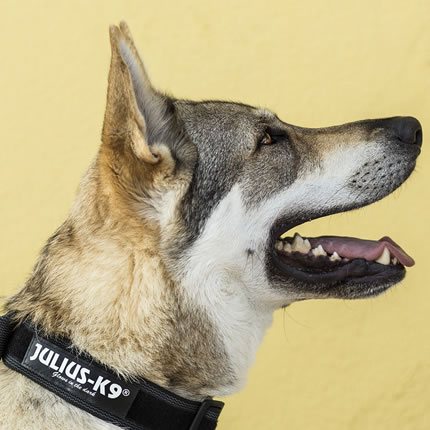 Collares para perros Julius K9
